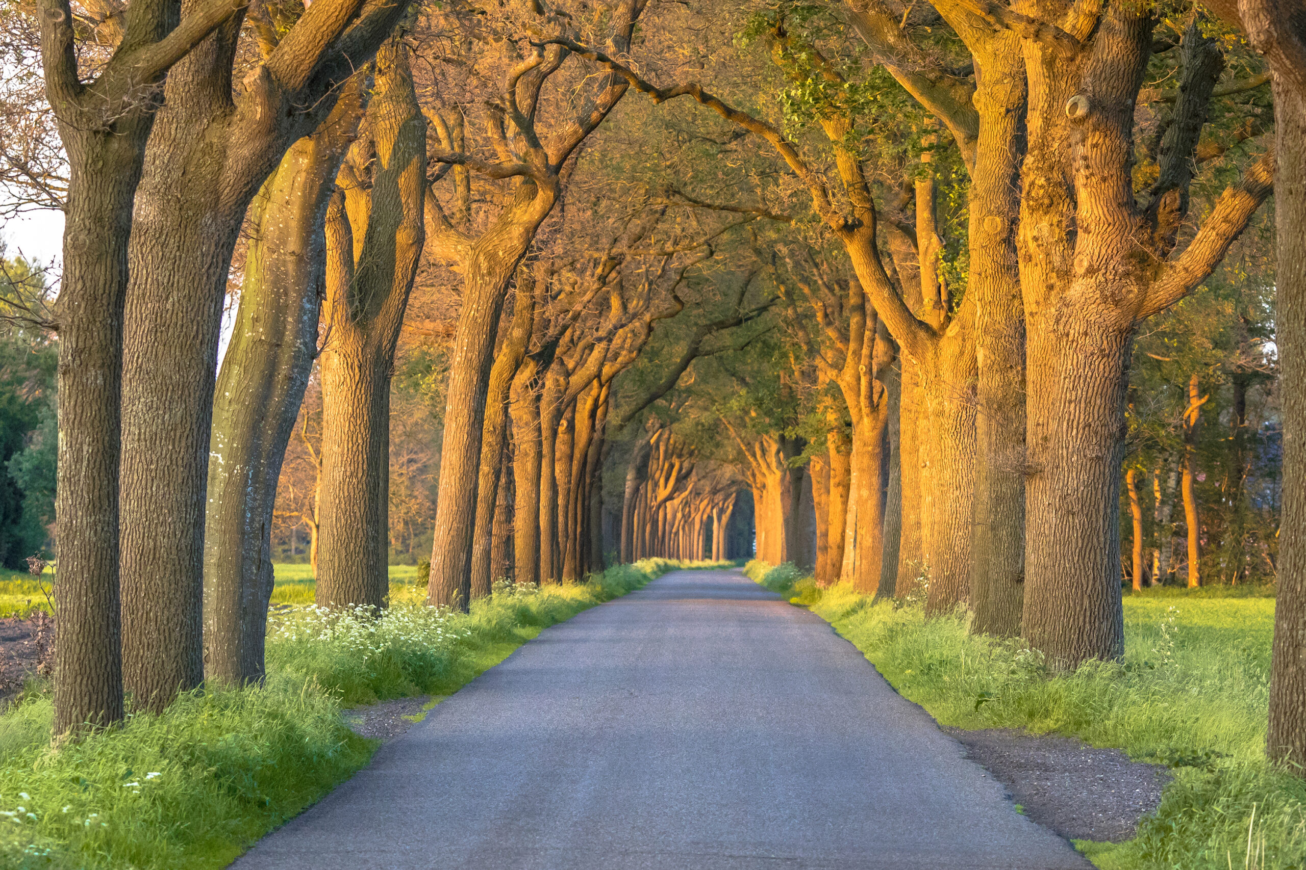 Understanding Why You Chose Your Life Path: The Role of Situation in the Decision-Making Process